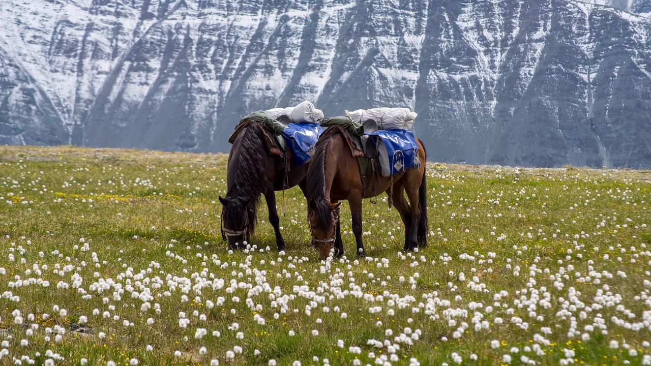 2 konia.jpg
