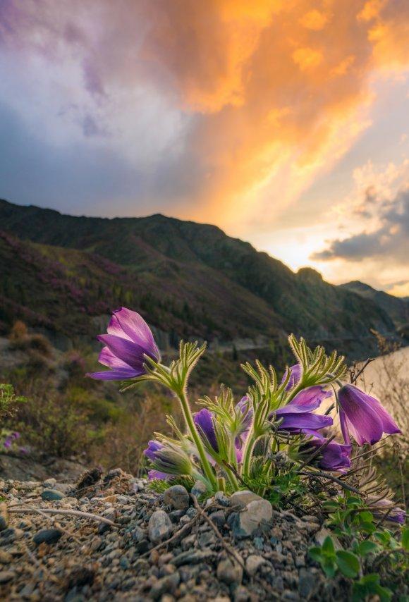 Цветок.jpg