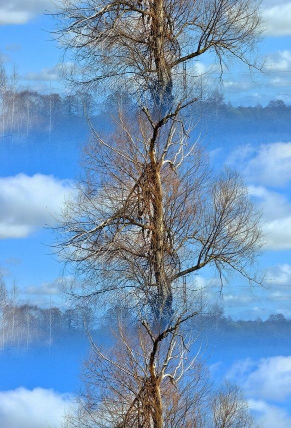 Дерево_эффект1.jpg