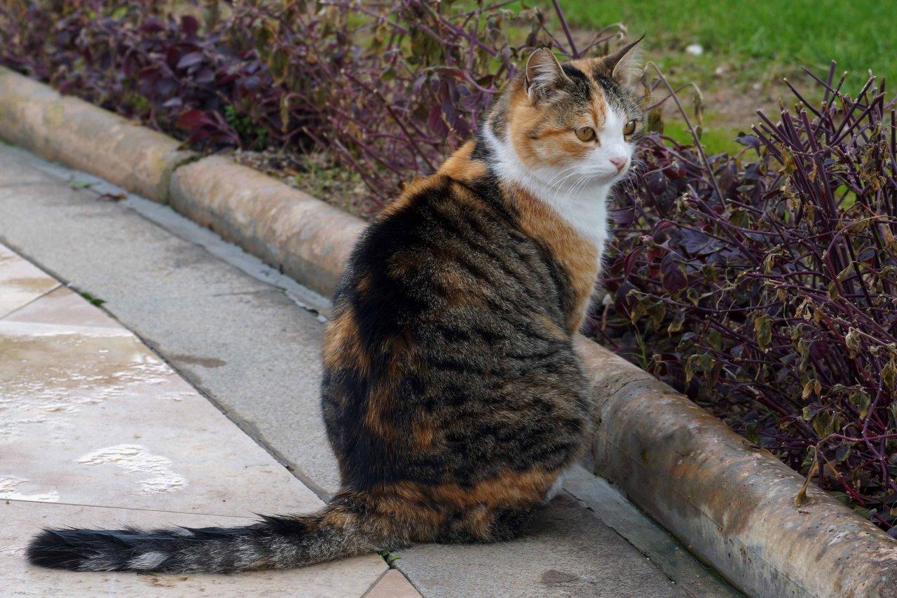 Katze (5).JPG