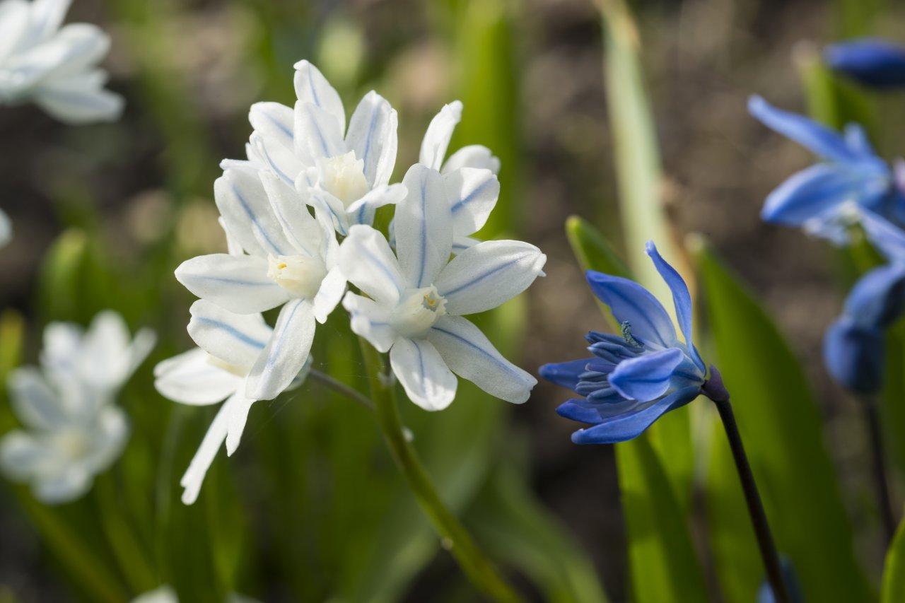 Мелкие цветы.jpg