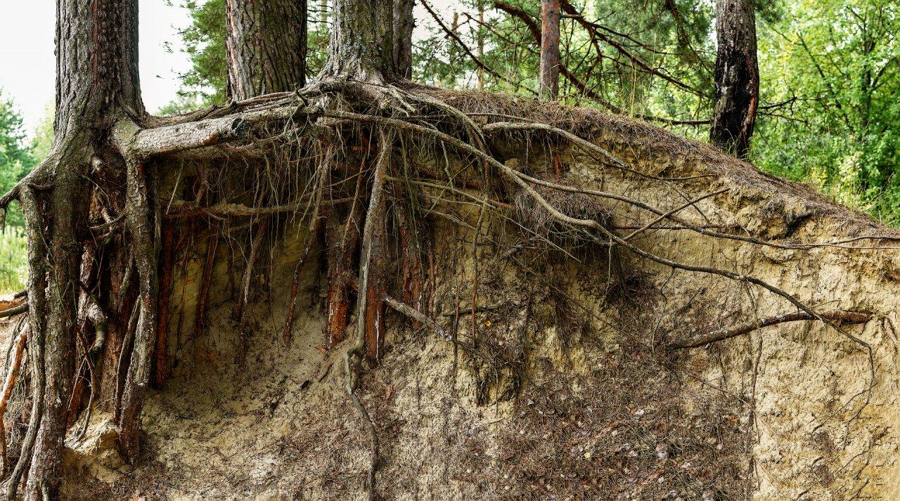 RootsPano1.jpg