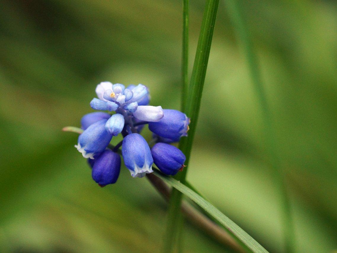 Синий цветок.jpg