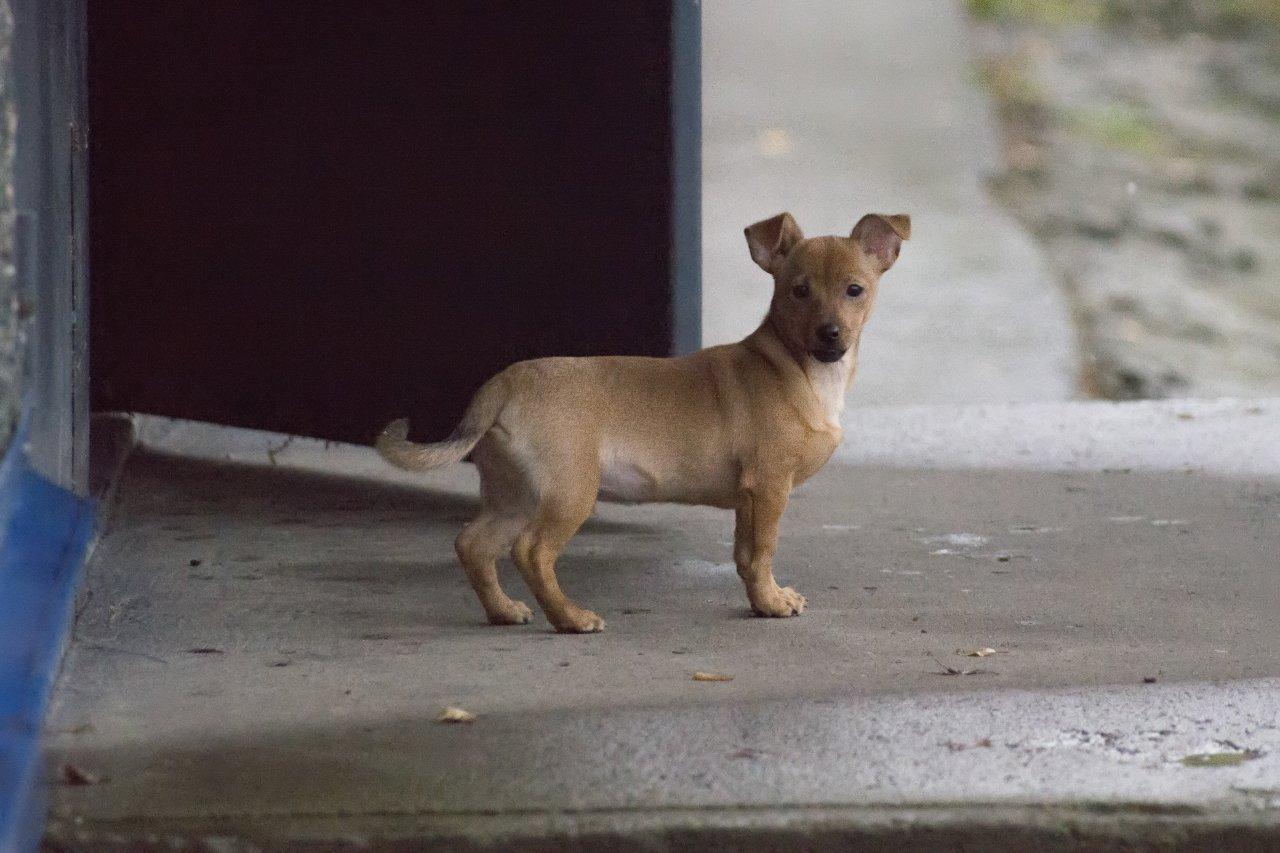 Собачка у подъезда.jpg