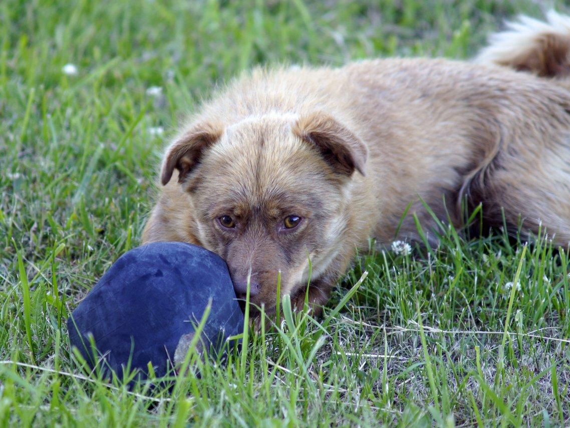собака с мячиком.jpg