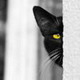 cat.spb